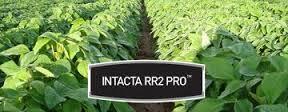 intactarr2pro