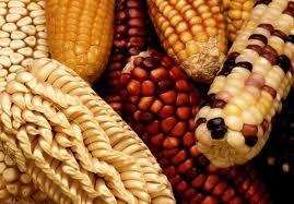 maize mexico