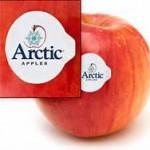 arcticapple