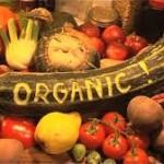 organicreport