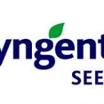 syngenta seeds2